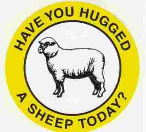 16-10-29-hug-a-sheep-day
