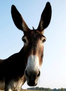 16-12-07-too-tall-mule
